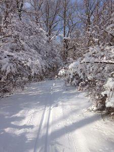 xcountry ski